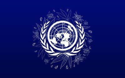 Nouvelle classification du cannabis : le service minimum de la Commission des stupéfiants de l'ONU